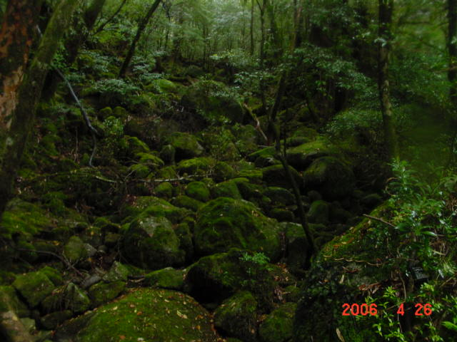 屋久島・白谷雲水峡